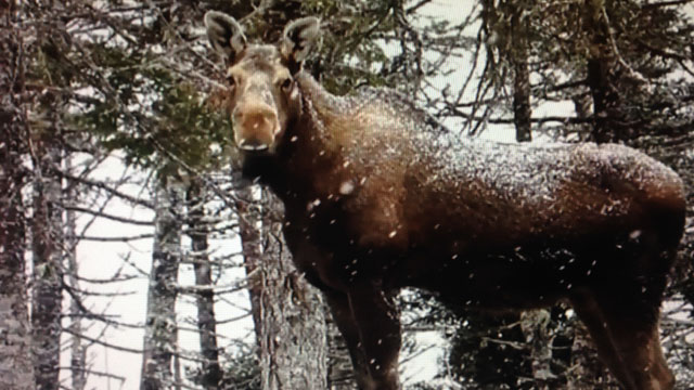 Algonquin Nation declares state of emergency due to over-hunting in Quebec wildlife reserve - APTN News
