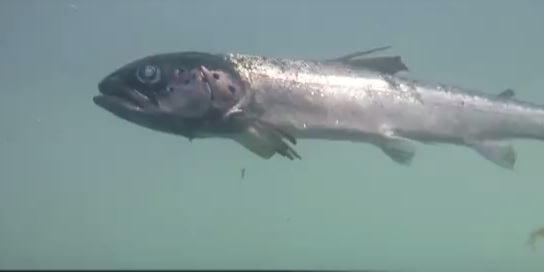 fishzombie2