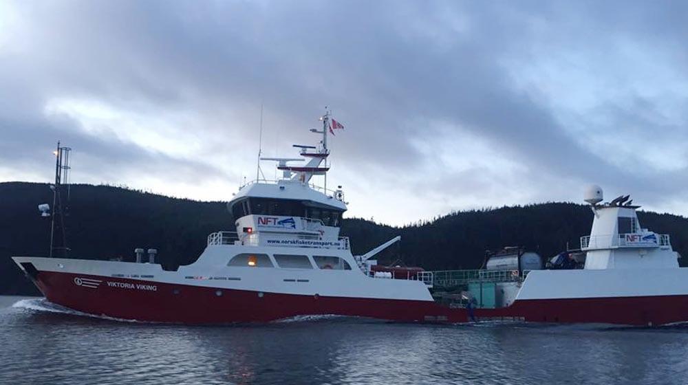 Viktoria-Viking2-1000-x-560