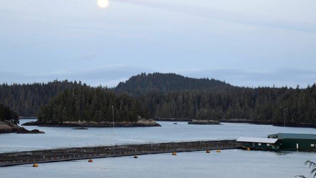 Swanson Island fish farm.