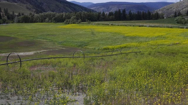 """""""That's who got all the best land out there, were ranchers and homesteaders,"""" says Stewart Fletcher, the community's knowledge keeper and archaeologist. """"We were left with the dry, steep, hillsides.""""Lauren Kaljur/The Discourse"""