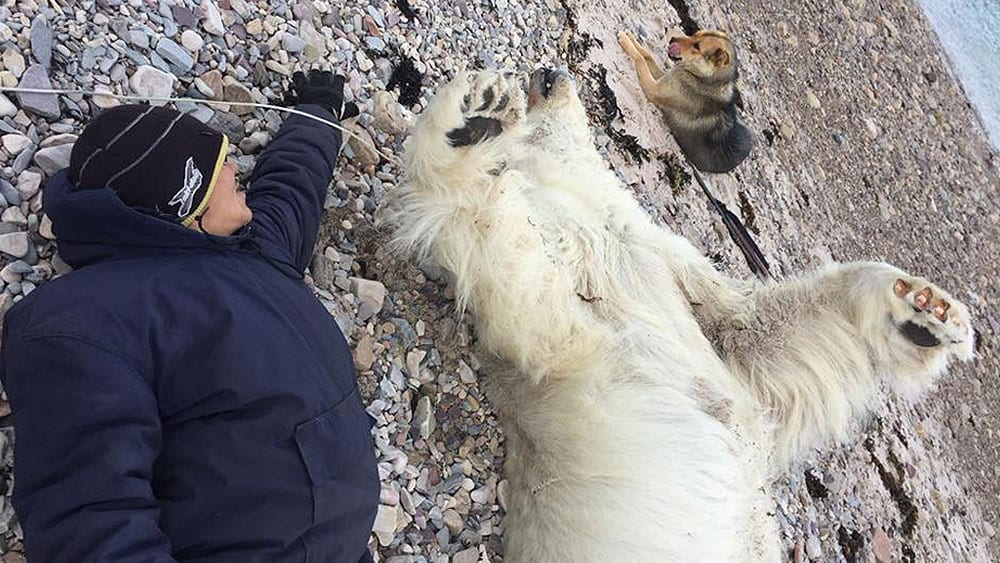 Issiah Oyukuluk lies next to the young polar bear he killed Sept. 2, 2018.