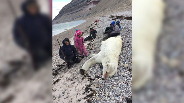 Campers say they killed this polar bear before it killed them.