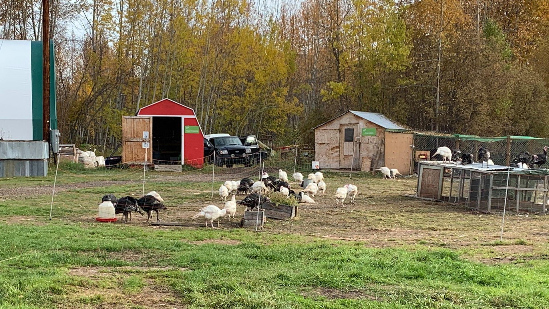 Yukon farm